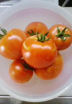 トマトさん 収穫♪