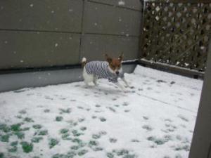 r 雪 011