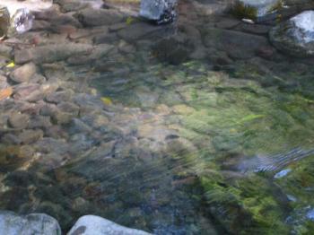 2009.5.京都 079s
