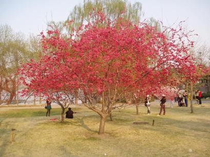 090410_yuyuantan(16).jpg
