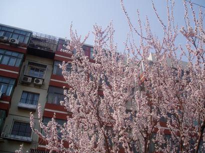 090320_hana (3)