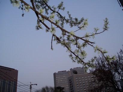090320_hana2 (3)