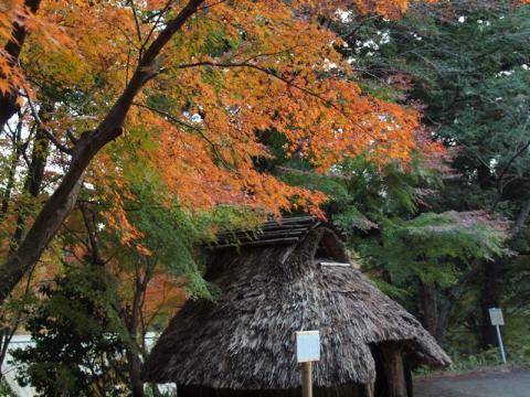 丸太の森紅葉1