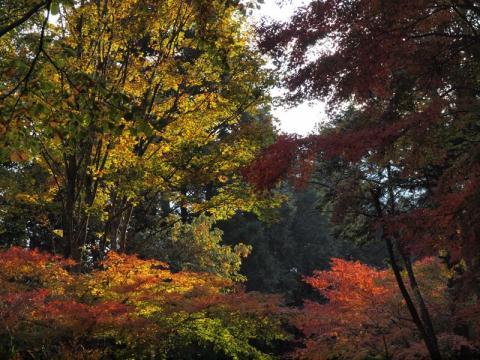 丸太の森紅葉2