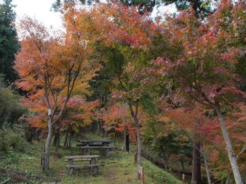 丸太の森紅葉3