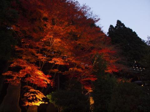 大山阿夫利神社 紅葉2009(夜景)