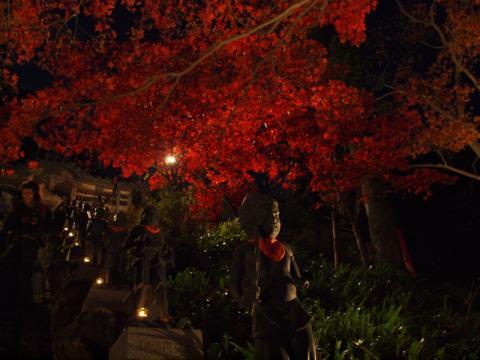 大山寺 紅葉2009(夜景)