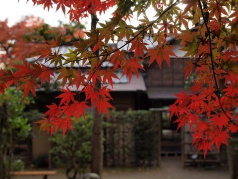 老欅荘紅葉