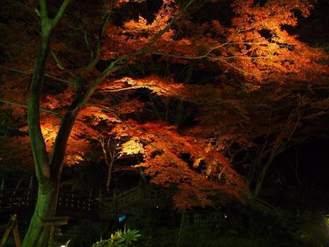 熱海梅園の紅葉2