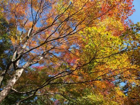 蓬莱園・紅葉