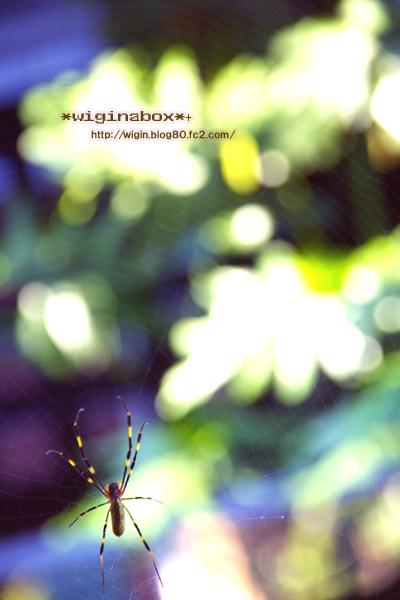 蜘蛛の糸にならないように。。