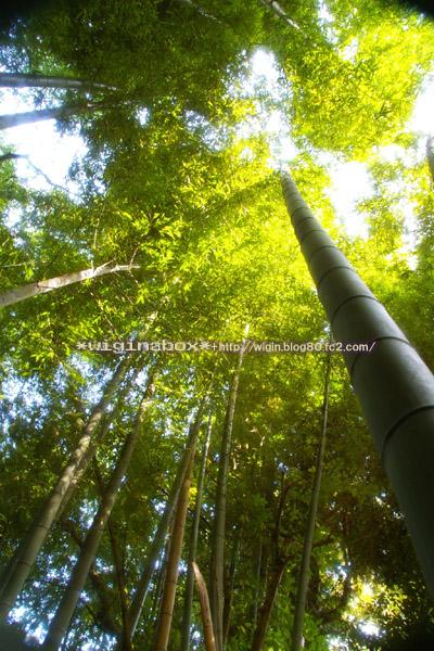 竹林なんて撮ってみちゃった。