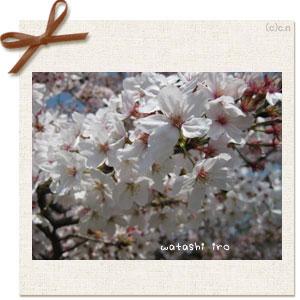 日本人は桜だねぇ~