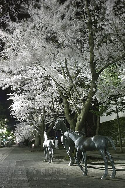 09十和田桜3