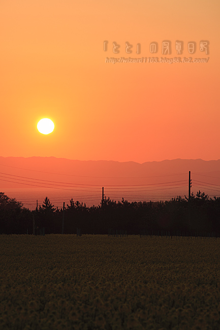 夕日と菜の花畑09