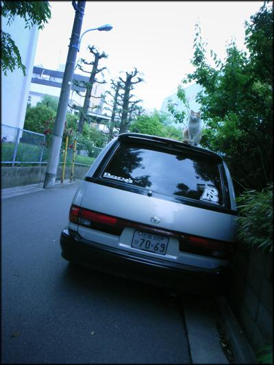 t060.jpg