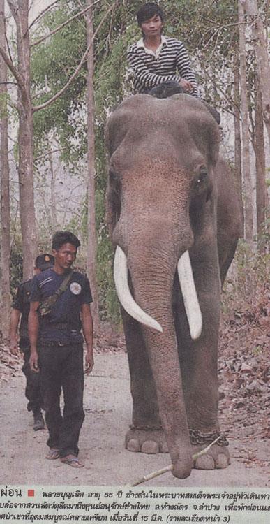 thai elph