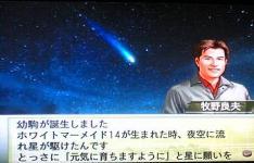 ホワイトマーメイド14流星