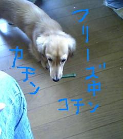 07075.jpg