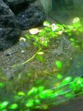 熱帯魚017