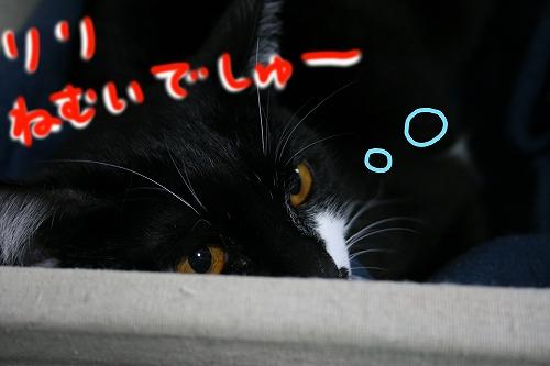 リリは眠いでしゅ~