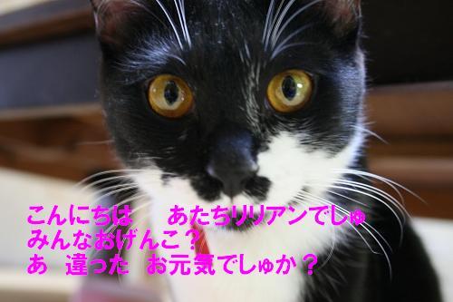 IMG_1039元気?