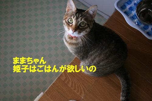IMG_1043うるうる