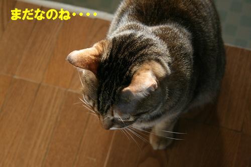 IMG_1049うなだれ