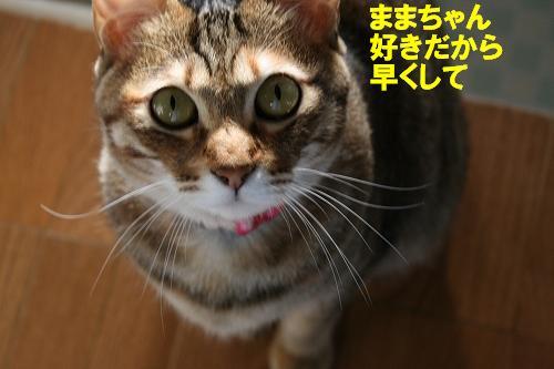 IMG_1051ひ