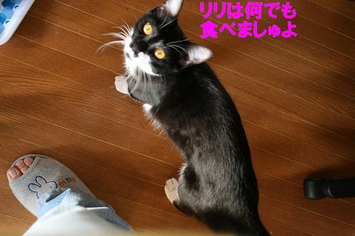 IMG_1048リリ