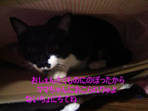DSC01921a.jpg