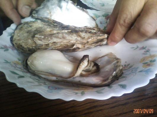 日生の牡蠣1