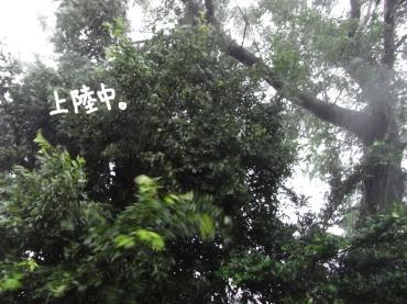 台風13号1