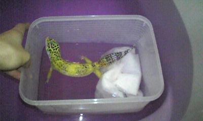 初めての温浴