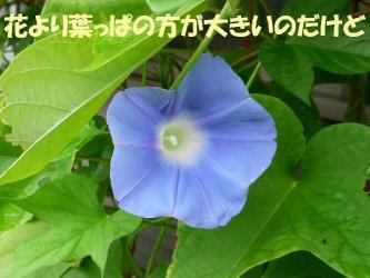 bP1020300.jpg