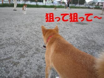 bP1020390.jpg