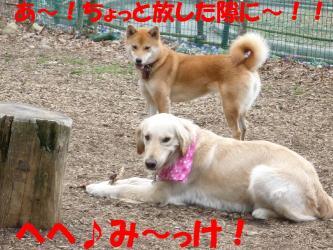 bP1050661.jpg