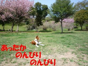 bP1060598.jpg