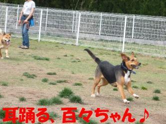 bP1070129.jpg