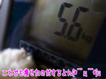 P1180981.jpg