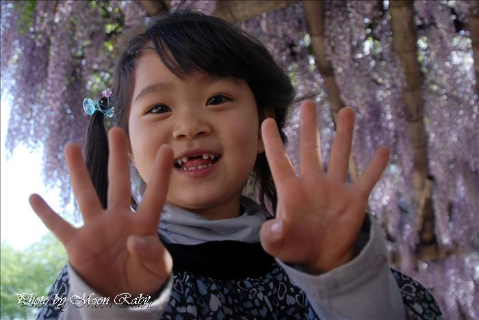 西条市のフジ 禎祥寺(観音堂、おかんのんさん)のフジ(藤)その2 西条市上喜多川 2009年4月22日