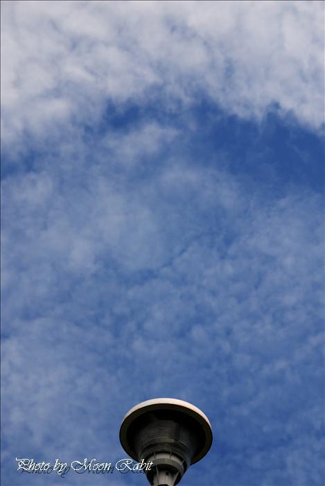 今治市市民の森・フラワーパーク(今治市制50年記念公園)の鯉のぼり(こいのぼり、鯉幟)・桜・八重桜(ヤエザクラ)・ボタン(牡丹)・ツツジ(躑躅、つつじ)・フジ棚(藤棚)・スイレン(睡蓮)など --写真は-- 今治市の名所 今治市市民の森 フラワーパークにて 愛媛県今治市山路 今治市制50年記念公園 2009年8月7日