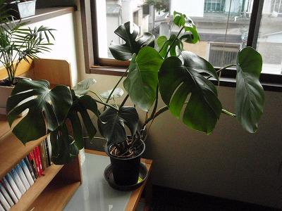 植物 006