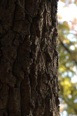 樹皮に蜘蛛糸