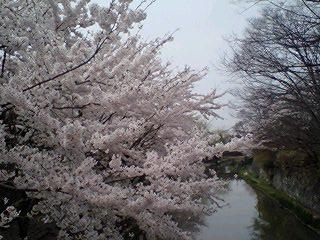 080409_05hori_k.jpg