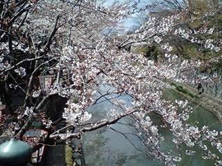 405_hachiman_02.jpg