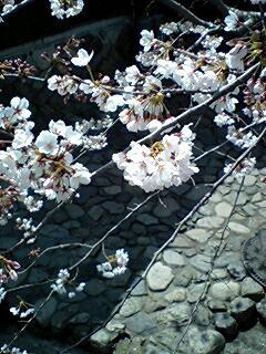 405_hachiman_08.jpg