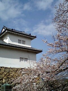 405_hikone_04_tenbin_sakura.jpg
