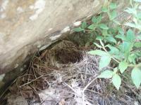 5年前と同じ鳥の巣