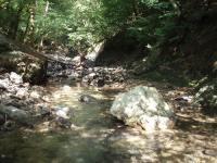 木漏れ日の渓